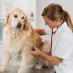 Financing your animal hospital